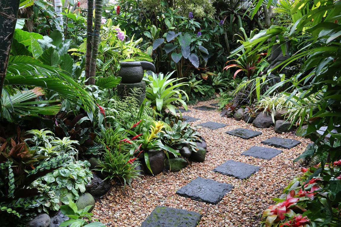 Tropical garden image gallery dennis hundscheidt for Garden design plants