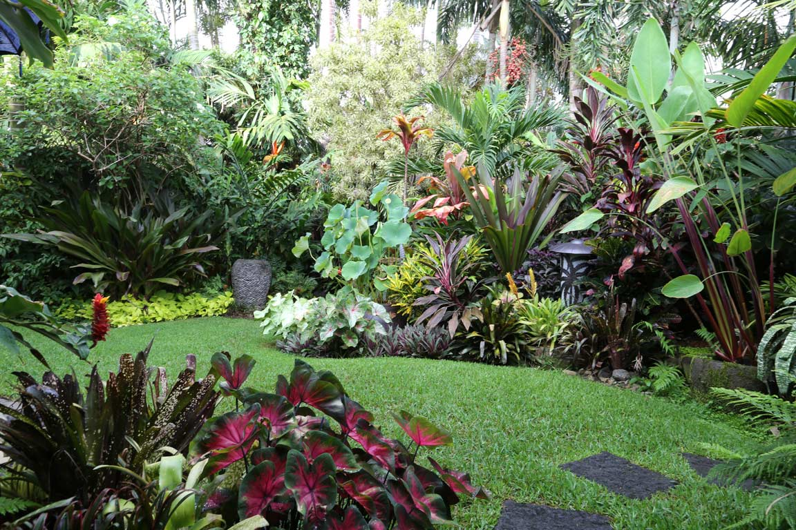 Tropical garden image gallery dennis hundscheidt for Tropical garden design