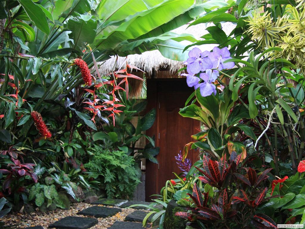 Tropical Garden Image Gallery - Dennis Hundscheidt: www.dennishundscheidt.com.au/gallery