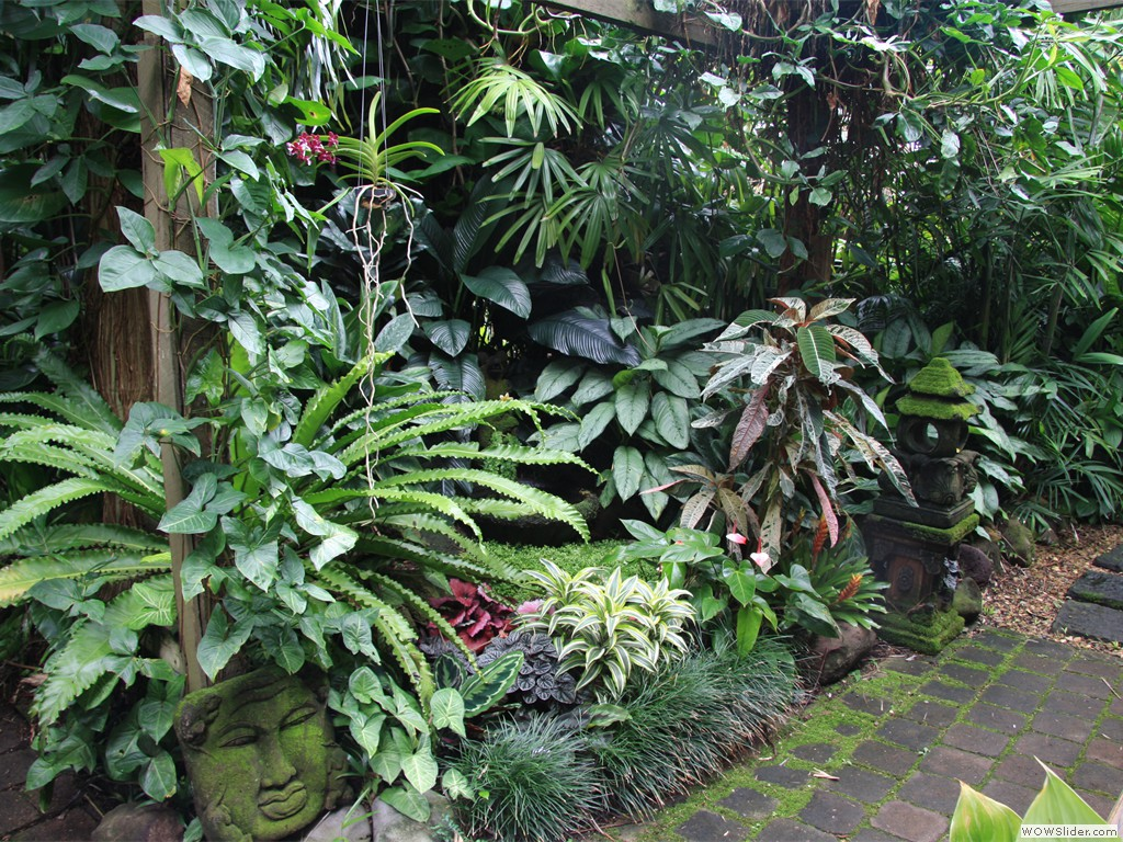 Tropical garden image gallery dennis hundscheidt for Backyard landscaping plants