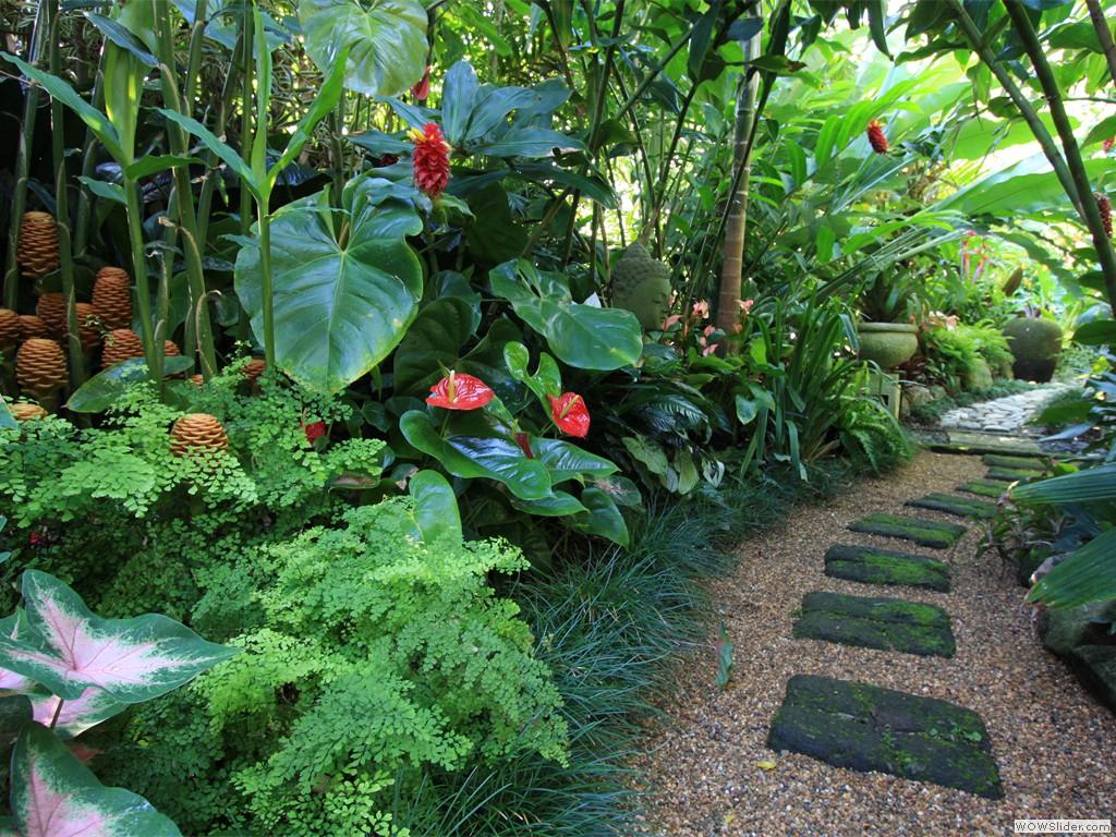 tropical garden image gallery