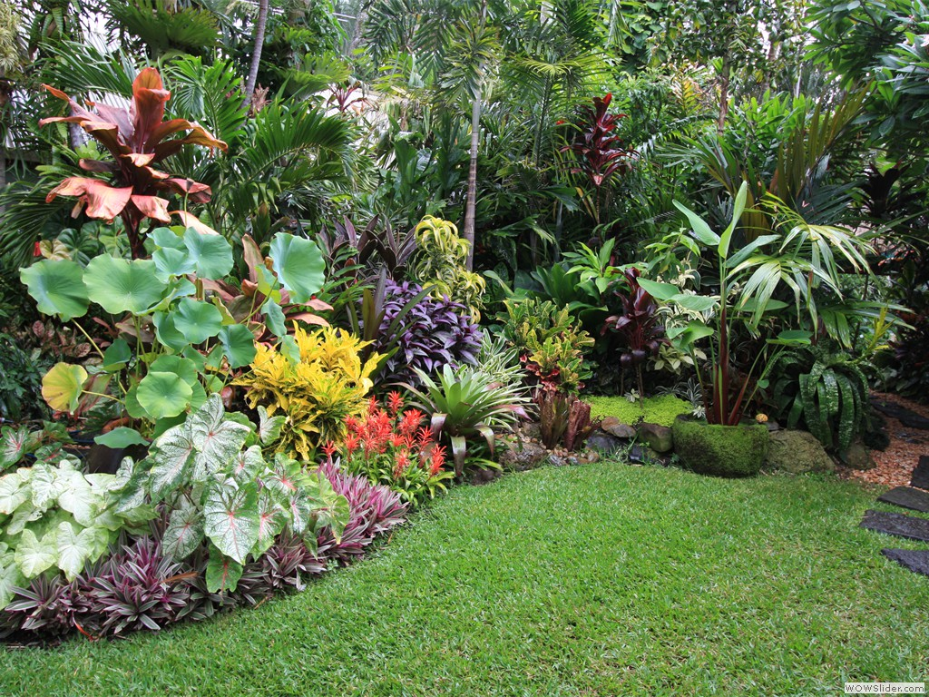 Tropical garden image gallery dennis hundscheidt for Tropical garden designs
